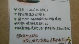 DSC_6398.JPG