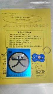 DSC_6821.JPG